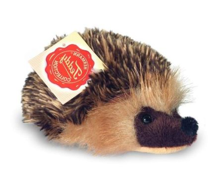 Small Ulloa Hedgehog