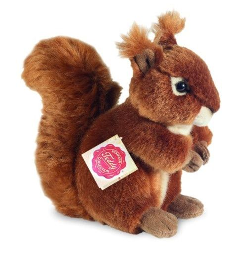 Ortigueira Red Squirrel